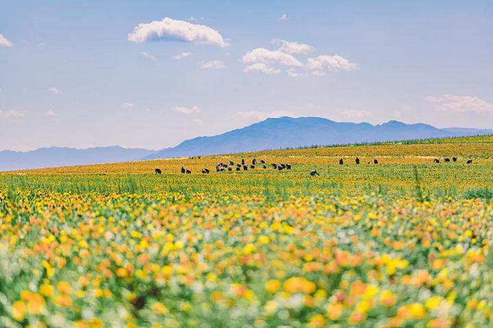 新疆农业-恢复的.jpg